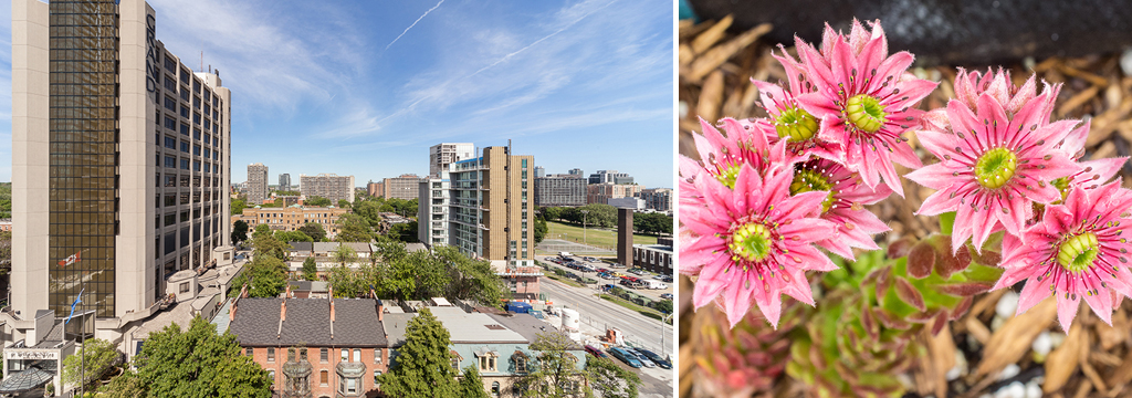 Hazelburn Co-op | Centrally located in downtown Toronto